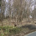 土地情報・さくら市フィオーレ喜連川3丁目(12639)